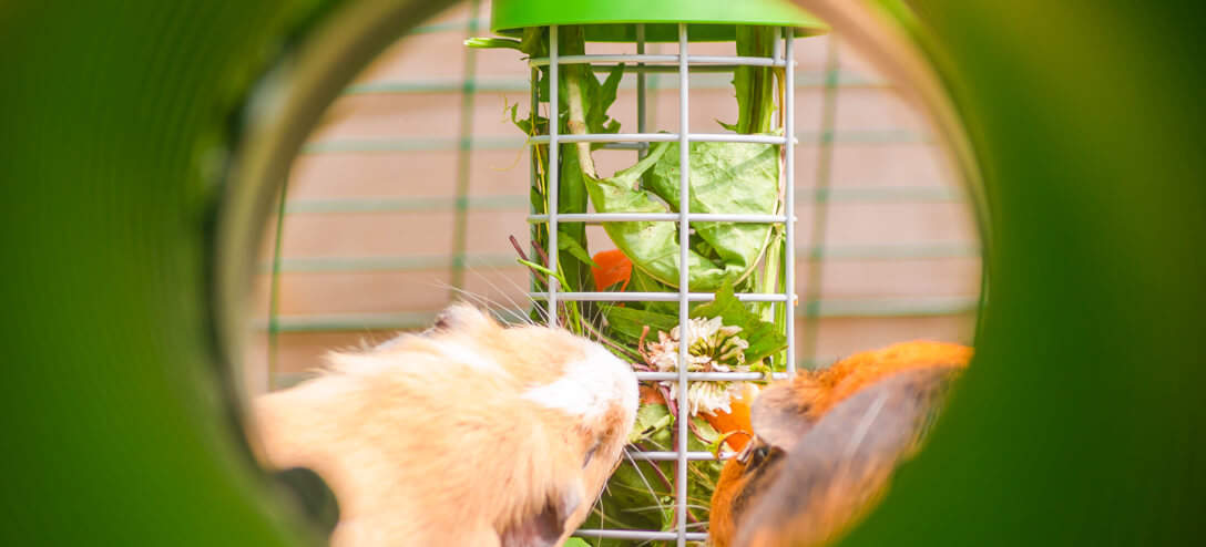 Your guinea pigs will love the interactive experience of feeding from the Caddi Guinea Pig Treat Holder