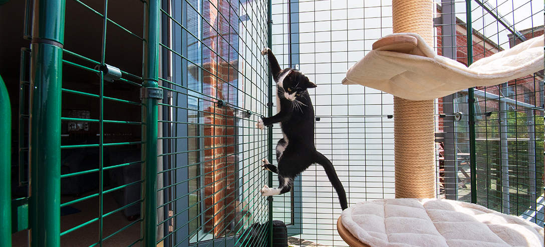 Unlike some other solutions such as balcony netting or fences, the Cat Balcony Enclosure is completely secure and escape proof!