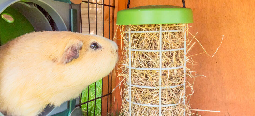 The feeder gently moves as the food is consumed, creating a fun and engaging challenge for your cavies