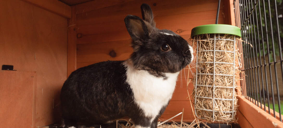 The Caddi also makes an excellent rabbit hay feeder that can be hung from your rabbit's wooden hutch or outdoor rabbit run