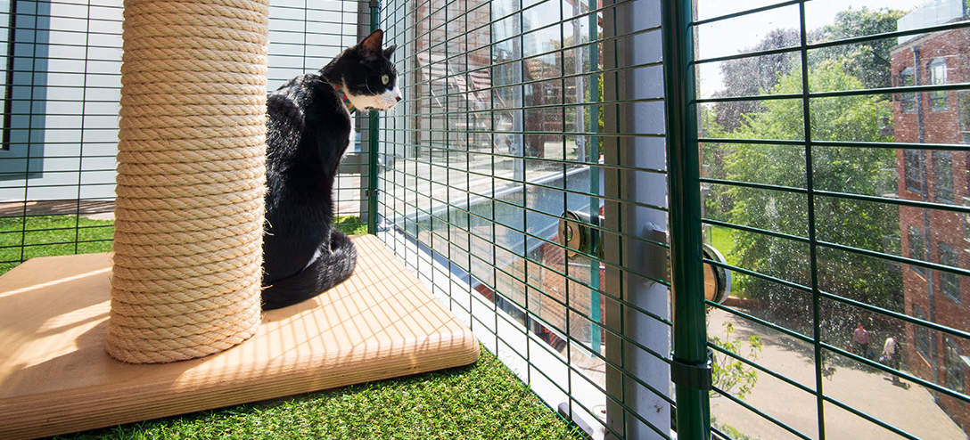 Your cat will love exploring their new secure space on the balcony and enjoying the sensory experience of being outside
