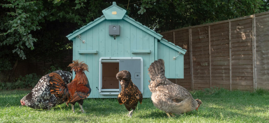 The Lenham comes untreated so you can finish the wooden coop in a colour of your choice. Further customise the coop with a quick fit Autodoor to make life easier!