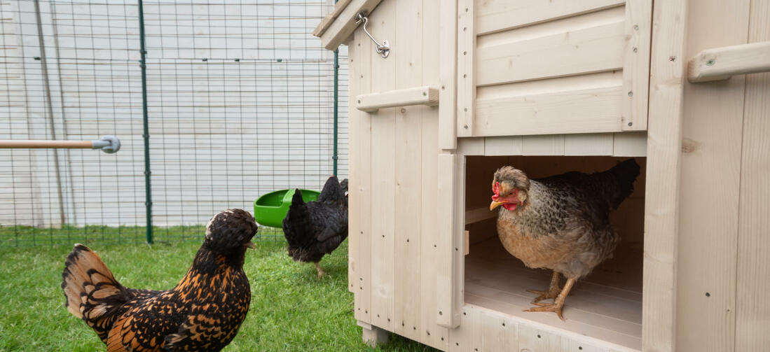 Whether you only have a few chickens or a larger flock, the Lenham will be a fantastic home for your hens.