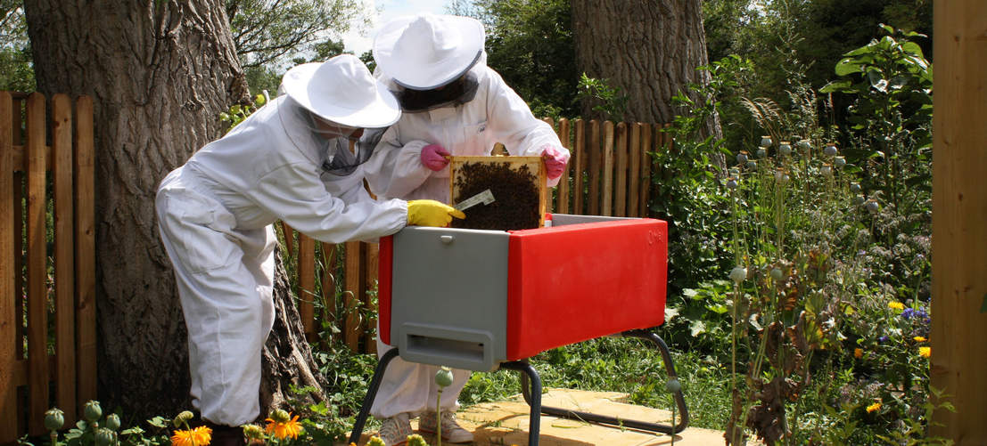 Beehaus beehive in garden with beekeepers using hive tool