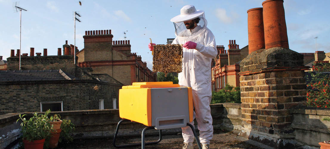 Beehaus beehive on urban rooftop with beekeeper inspecting frame