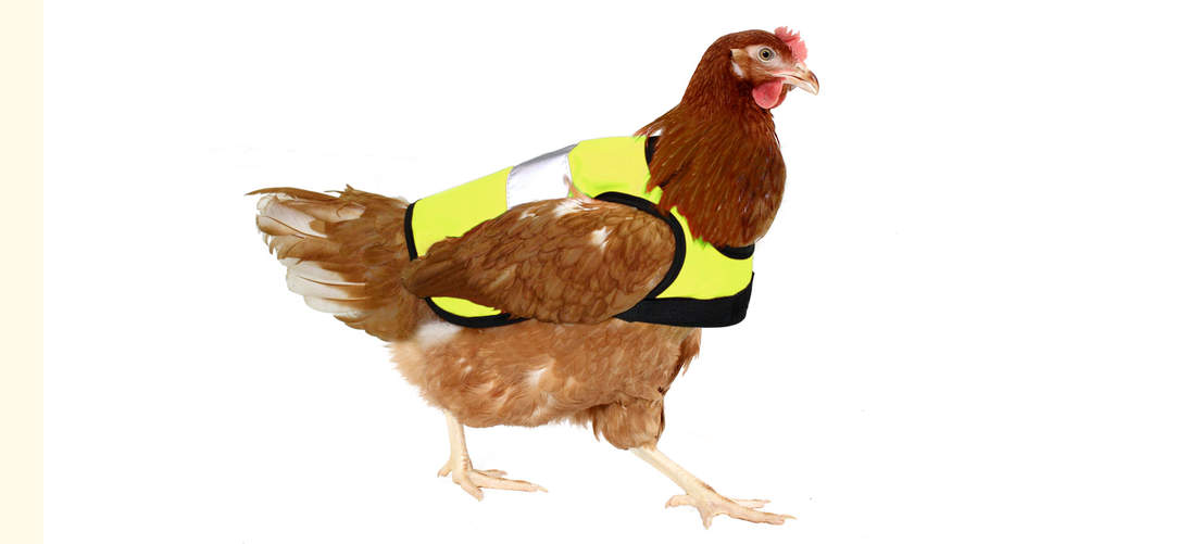 The High-Vis Chicken Jacket in Yellow