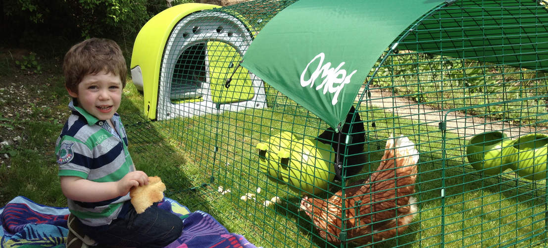 Children love watching pet chickens in the Eglu Classic Coop