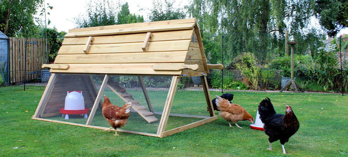 Remove the free-range door of the Boughton Chicken Coop to let your hens roam around the garden