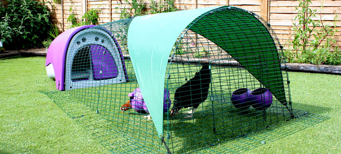 The Purple Eglu Classic Chicken Coop looks great in the garden
