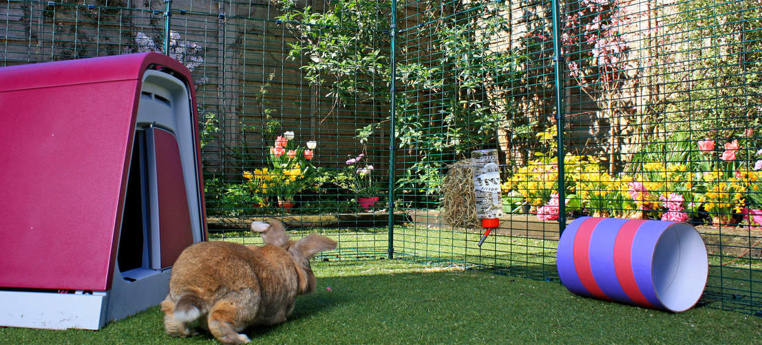 Rabbits will love hopping around the large outdoor run enclosure.