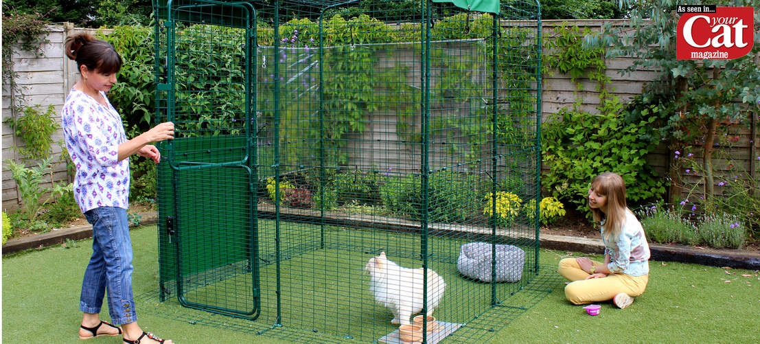 Ragdoll cat in 2x2x2 Outdoor Cat Run, as seen in Your Cat Magazine