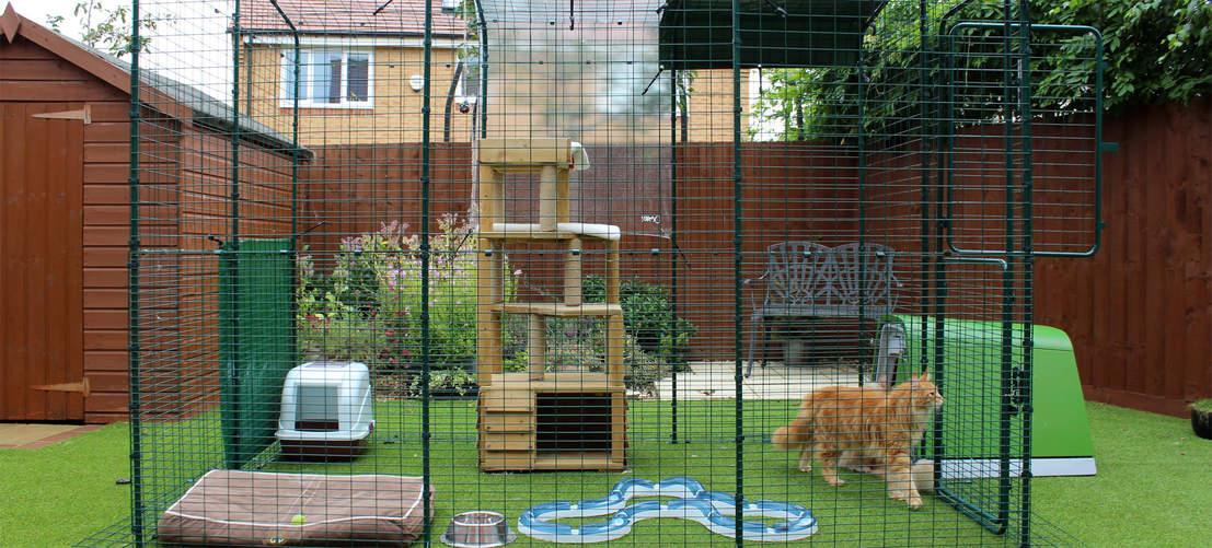 A pair of Maine Coons in a 2 x 3 Outdoor Cat Run