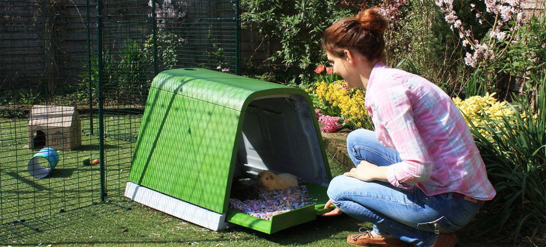 Guinea pigs love to cosy down in the Eglu Go Hutch