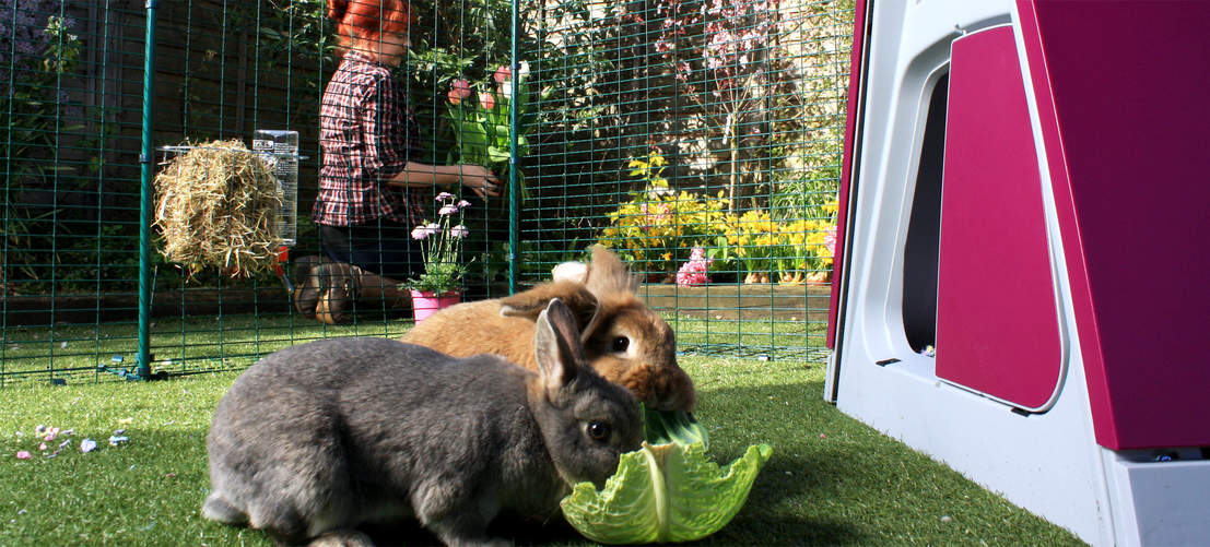 Bunnies will love spending time in this spacious outdoor rabbit run, while you can go about your daily chores.