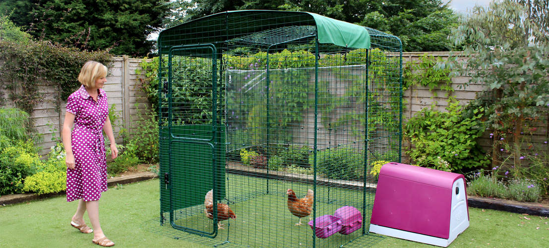 2x2x2 Walk in Chicken Run attached to Eglu Go Chicken Coop