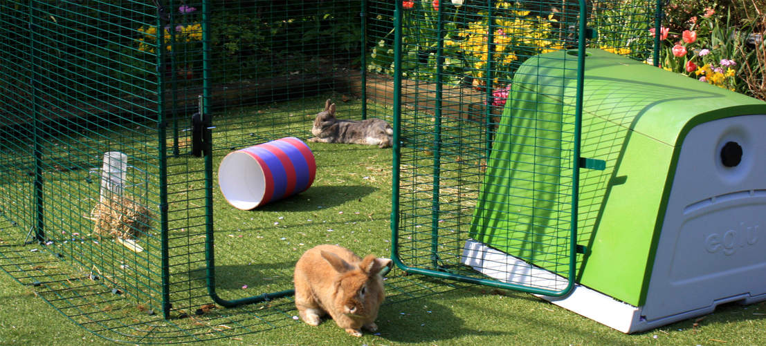 The lo-rise rabbit run offers lots of floor space for your pet bunnies.