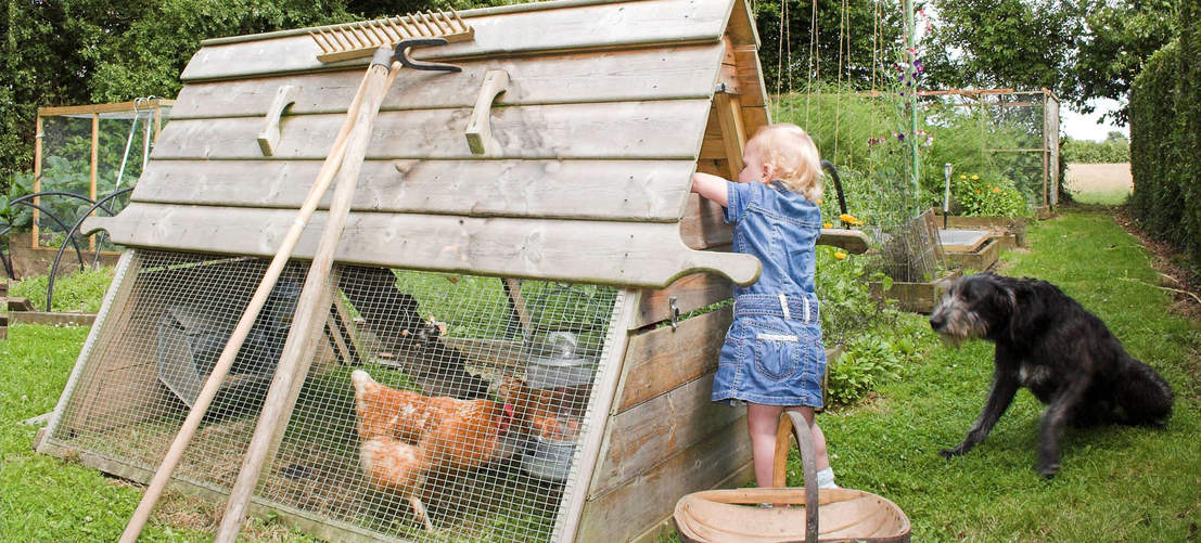 Children will love collecting eggs from the Boughton Chicken Coop
