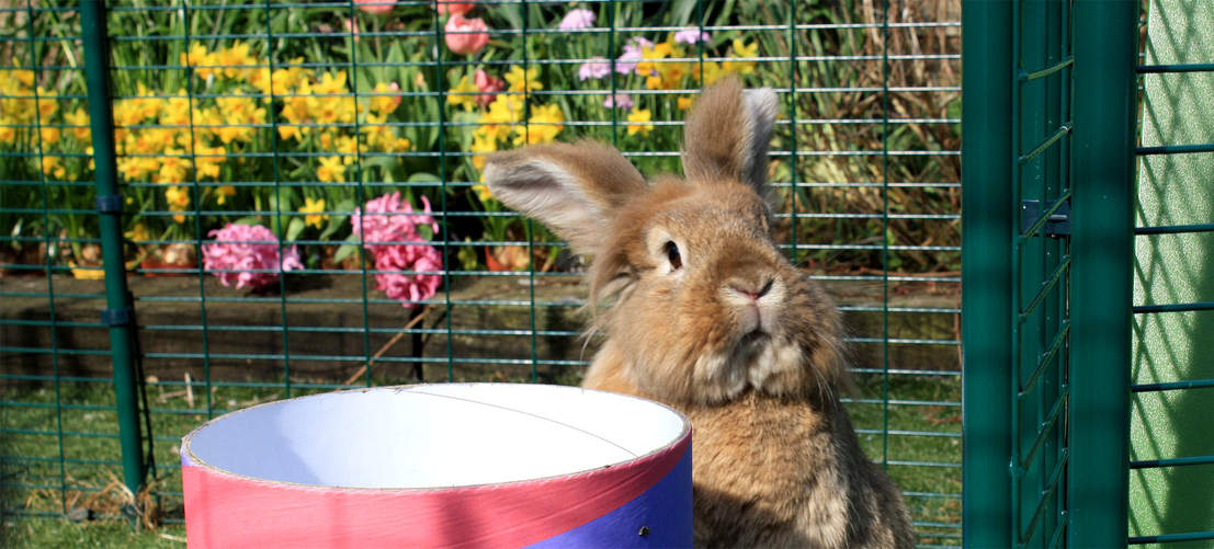 The Outdoor Rabbit Run is suitable for every rabbit breed and size.