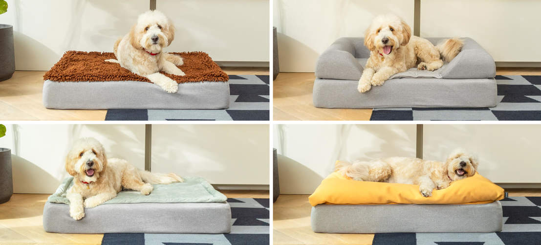 Woody the Goldendoodle likes to switch it up; clockwise from top left the Microfiber, the Bolster, the Beanbag and the Quilted.