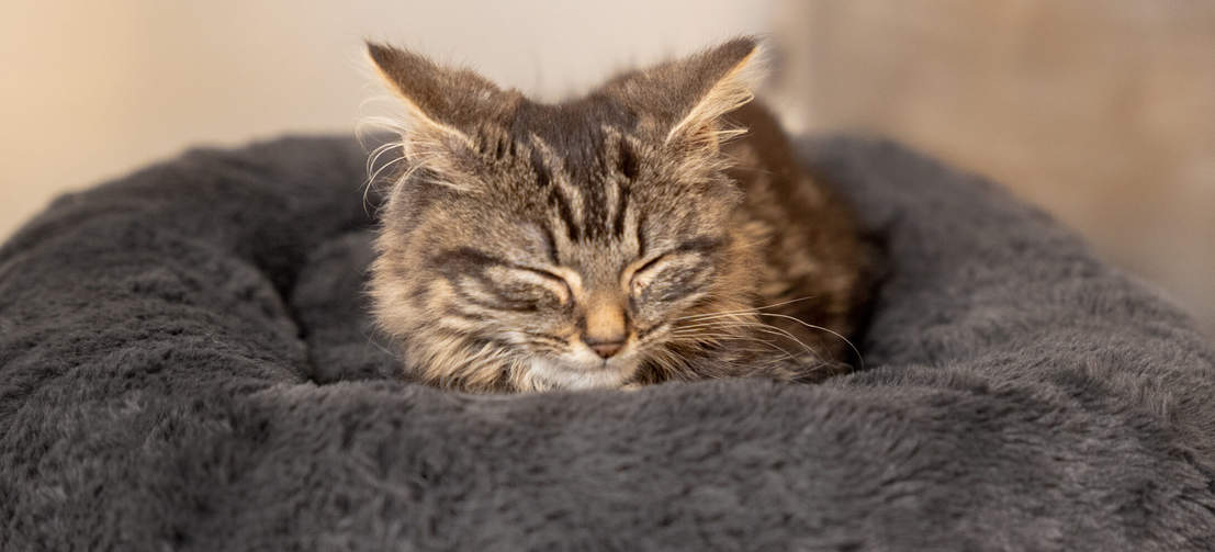 Your cat deserves a great night's sleep, and the super soft, faux fur plush cat bed provides that... and more!