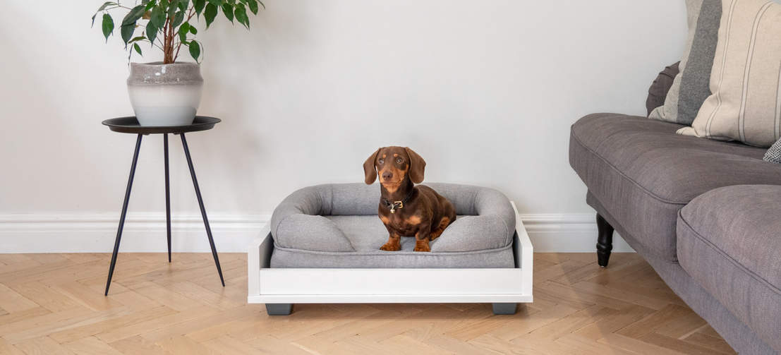 The Bolster Bed fits perfectly with Omlet's amazing Fido dog furniture range, such as the Fido Sofa which Winston the Dachshund is using with his Small Bolster Bed.