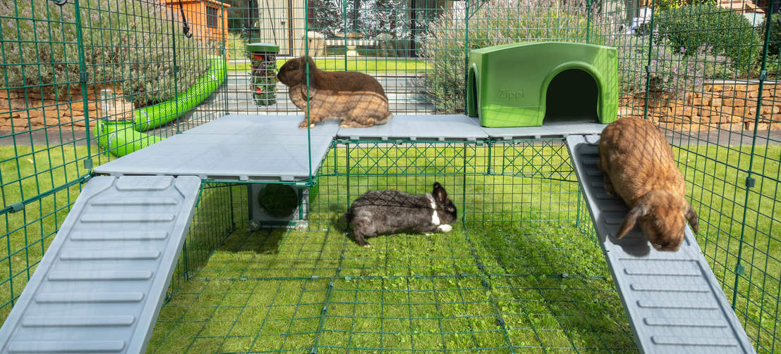 Give your rabbits even more space to play with Zippi Platforms, designed to securely fit to your double height Zippi Run.