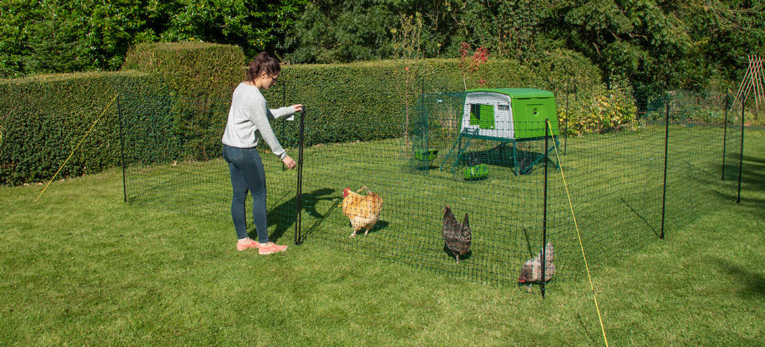 Omlet's chicken fencing features tangle proof netting and adjustable fencing poles