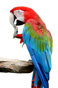 A Red and Blue Macaw's beautiful white beak and long, blue tail feathers