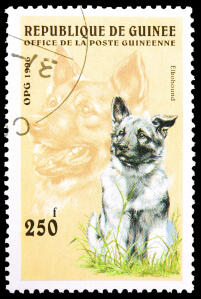 A Norweigian Elk Hound on a West African stamp