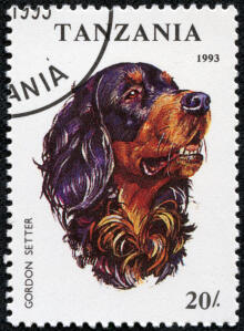 A Gordon Setter on a Tanzanian stamp