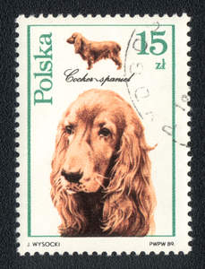 A Cocker Spaniel on a Polish stamp