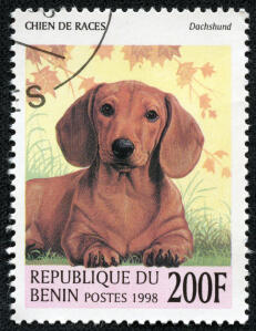 A Dachshund on a West African stamp