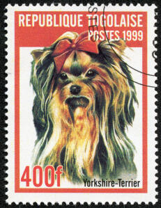 A Yorkshire Terrier on a West African stamp