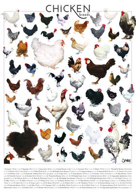 Omlet Chicken Breeds Poster