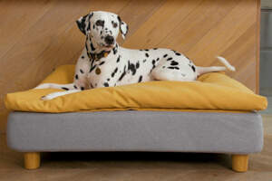 Topology Dog Bed with Bean Bag Topper and Round Wooden Feet  - Large