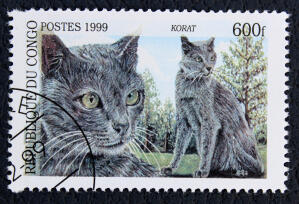 A stamp from the democratic republic of of congo with a korat cat printed on it