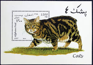 A marbled tabby Manx on a postage stamp from Afghanistan