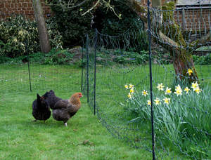 Electrifiable Chicken Netting - 50 Metres with Extra Poles