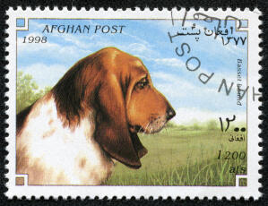 A Basset Hound on an Afghan stamp