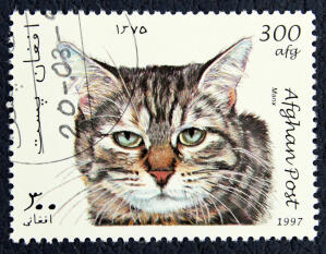 tabby Manx cat on a postage stamp