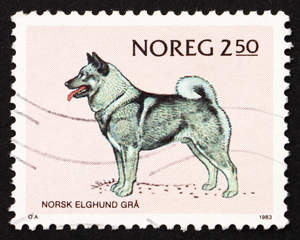 A Norweigian Elk Hound on a Norwegian stamp