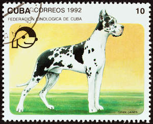 A Great Dane on a Cuban stamp