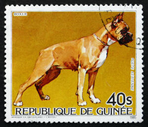 A Boxer on a West African stamp