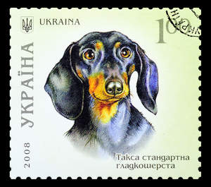 A Dachshund on a Ukrainian stamp