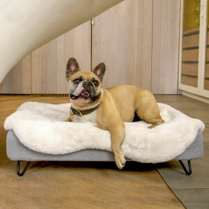 Topology Dog Bed with Sheepskin Topper and Black Metal Hairpin Feet - Medium