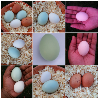 my egg collection