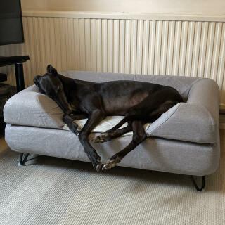Topology Dog Bed with Bolster Topper and Black Hairpin Feet - Large - Greyhound