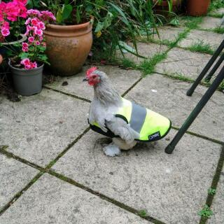 No-one will miss this little lady in her High Vis jacket!