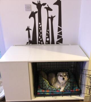 Kobe loves his new bedroom