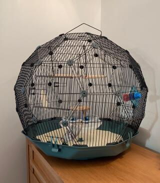 Love this budgie pad!